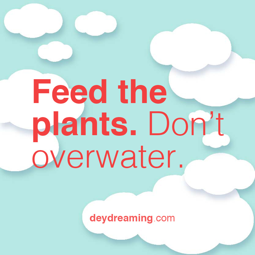 feed the plants dont overwater
