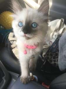 OMtheKitty, Om the kitty's first drive home